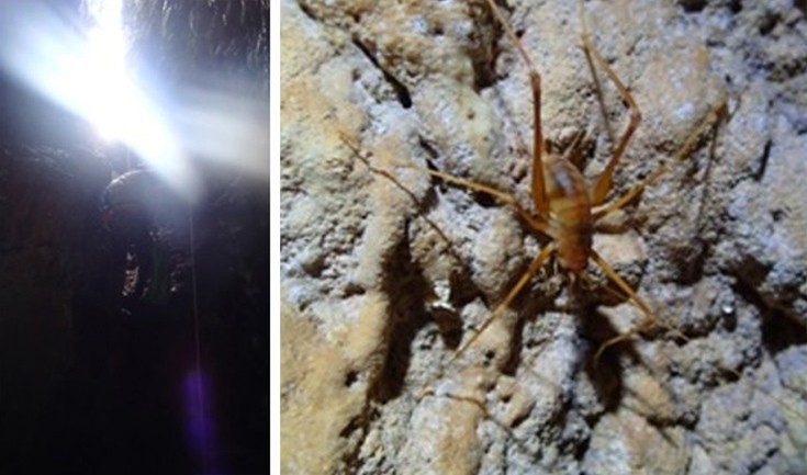 Νέο είδος οργανισμού, μοναδικό στον κόσμο ανακάλυψαν σπηλαιολόγοι στην Αιτωλοακαρνανία