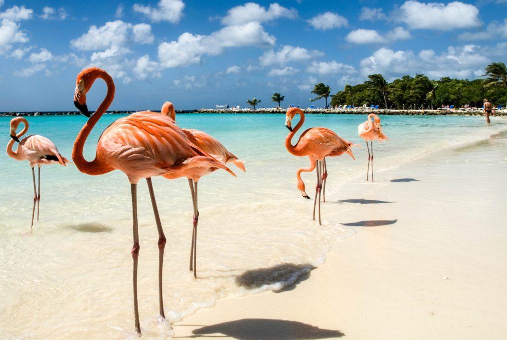 Vavel.gr | Η πανέμορφη παραλία των φλαμίνγκο που μπορεί κάποιος να κάνει μπάνιο μαζί τους