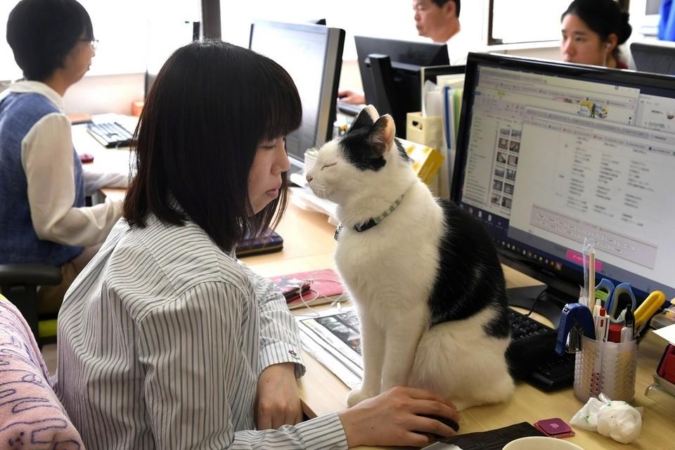 «Προσλαμβάνουν» γάτες κατά του εργασιακού στρες