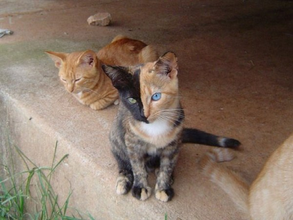 Venus, η γάτα με τα δυο πρόσωπα!