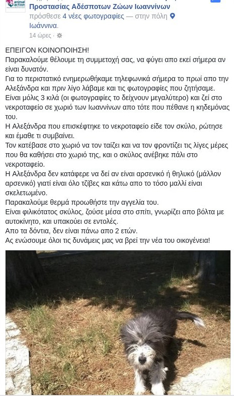 Ο Χάτσικο των Ιωαννίνων -Ζει στο νεκροταφείο, δίπλα στο μνήμα του αφεντικού του