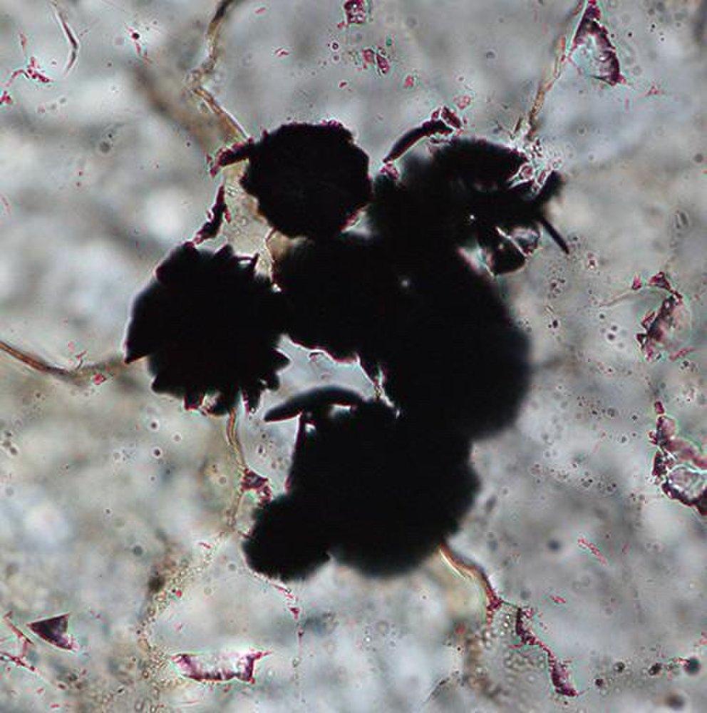Vavel.gr | Οι επιστήμονες ισχυρίζονται πως βρήκαν τις «αρχαιότερες αποδείξεις» ζωής στη Γη