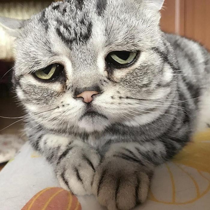 Αυτή είναι η πιο θλιμμένη γάτα στον κόσμο που στην πραγματικότητα δεν είναι θλιμμένη