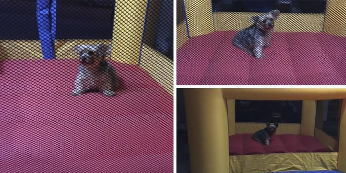 20 κακομαθημένα σκυλιά που οι ιδιοκτήτες τους δεν τους χαλάνε χατίρι