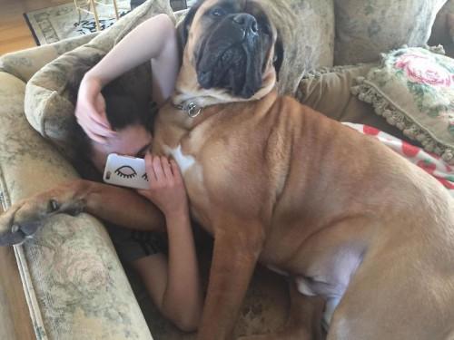 Vavel.gr | 20 Μαλλιαροί γίγαντες που θέλουν αγκαλιές...(φώτο)